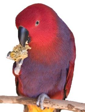 Harrison Birdie Bread