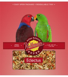 Volkman Seed Eclectus