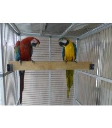 Photo courtesy of Phoenix Landing's Helping Parrots